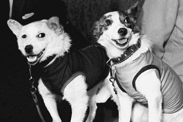 Service Dog Free Press