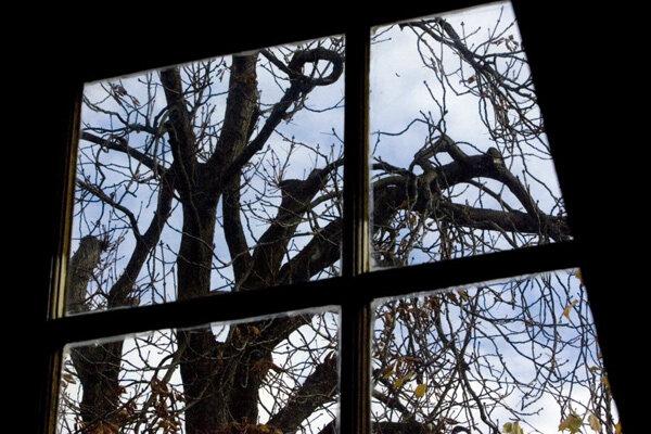 Anne Frank Tree Knocked Down By Storm Csmonitor Com