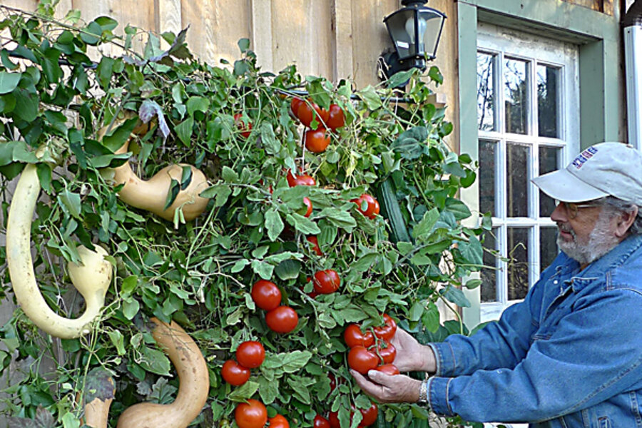 Is Your Garden Going To Seed Good Csmonitor Com