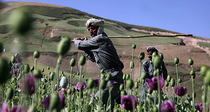 Afghanistan opium crop blight sends drug prices soaring