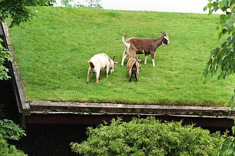 When Trademark Law And Goats Run Amok Csmonitor Com