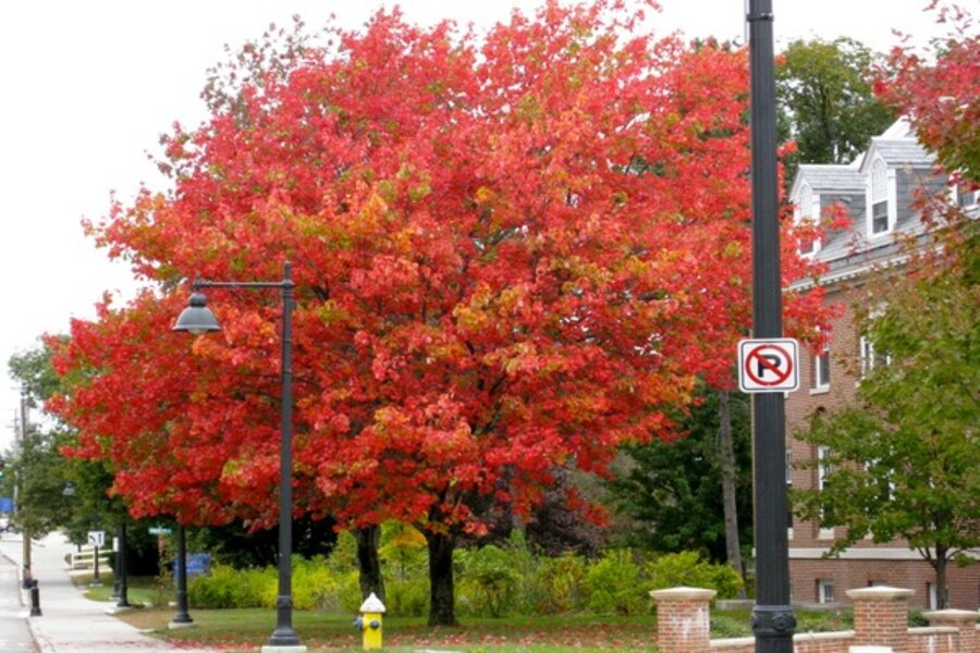 When To Prune Trees And Shrubs Wait Till After The Leaves Fall