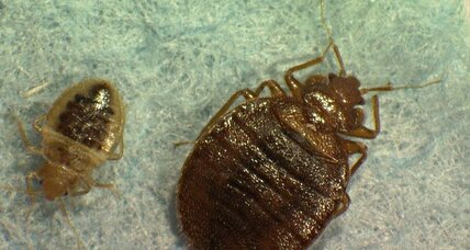 Bed bugs: Lincoln Center is latest to confirm infestation in the most bed bug-infested city in America