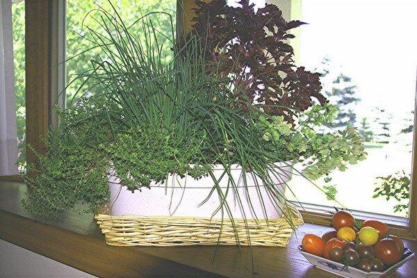 How to grow herbs indoors during winter - Best herbs to grow indoors ...