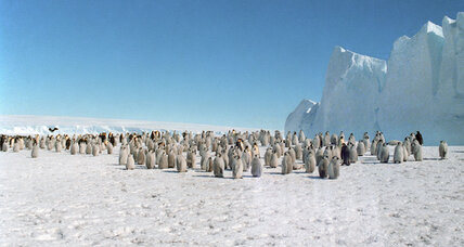 Google Street View, now with penguins