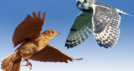 Are you an owl or a lark? A chronotype quiz.