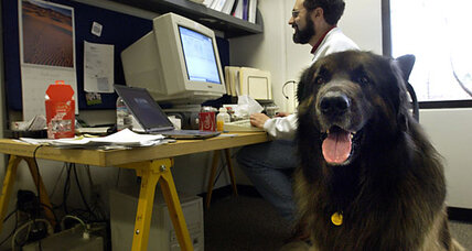 Is your office going to the dogs? Five top dog-friendly employers.