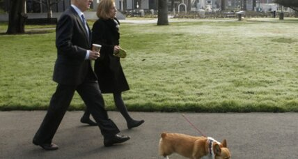 Five reasons why California Gov. Jerry Brown should keep the corgi dog