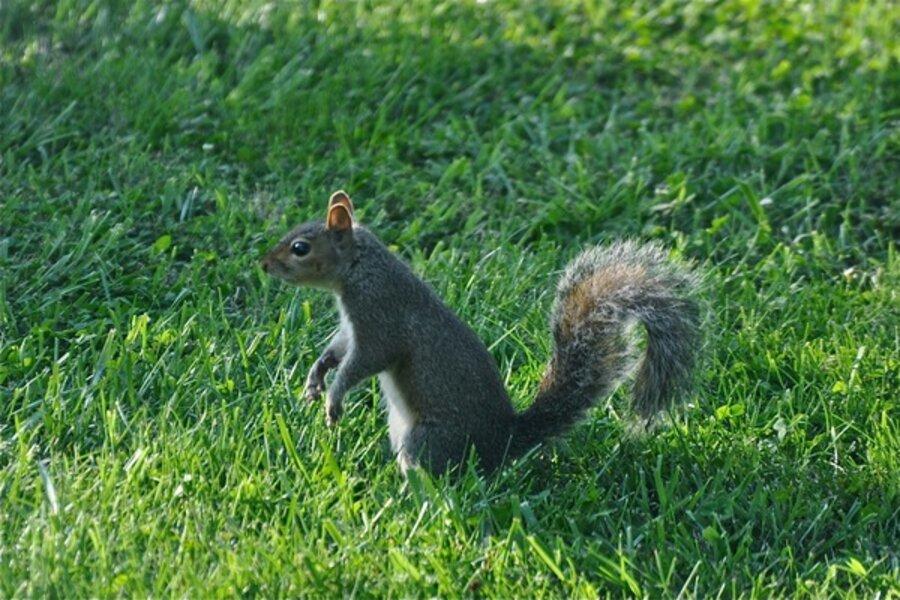 How To Deter Destructive Squirrels