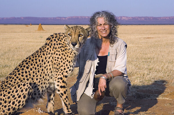 Using a wood chipper to save cheetahs, Africa's most endangered big cats