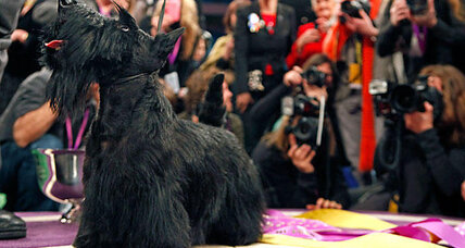 Westminster Dog Show: Five spunky Best in Show winners
