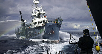 Is Sea Shepherd's 'harassment' helping to end Japan's annual whale hunt?