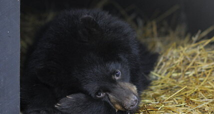 What hibernating bears can tell us about space travel