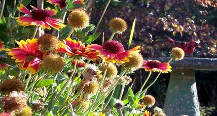 Native plants help birds and small wildlife