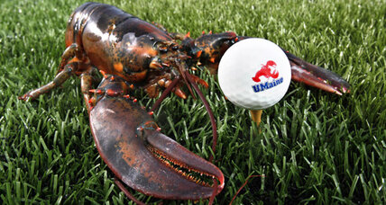 Lobster shells valuable for golf balls, plant pots