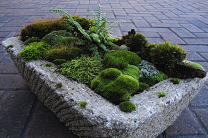 This Lovely Dish Garden Featuring Mosses Was Created By David Spain Of Moss  And Stone Gardens In Raleigh, N.C.