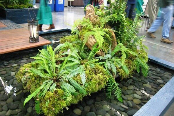 Fern Garden Ideas Five great ideas from water garden designers csmonitor this fern and moss island appears to float in a shallow pool workwithnaturefo
