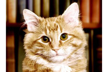 csmarchives/2011/04/dewey-cat.jpg