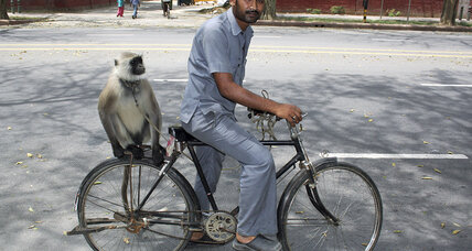 Monkeys protect Indian government officials