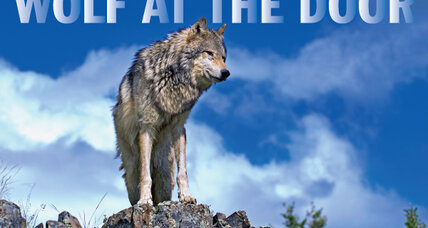 Wolf wars: Can man and predator coexist in the West?