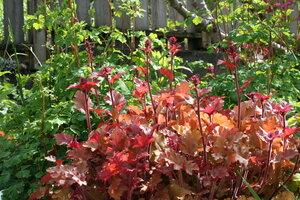 Garden Design Using Native Plants