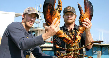 How large can lobsters grow? Big! But no one knows how big.