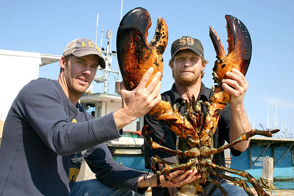 How large can lobsters grow big but no one knows how big for Lobster fishing california