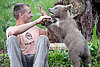 Medo the Slovenian brown bear cub makes a cute pet – for now