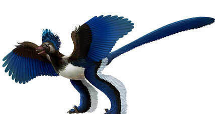 Archaeopteryx may not have been a bird, but just a feathery dinosaur