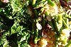 Crunchy, salty (and easy) kale chips