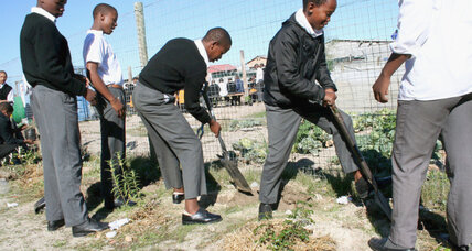 Food gardens at Cape Town area schools grow food and teach farming skills