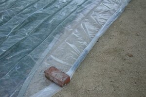 When Solarizing A Lawn, Extend The Plastic Sheet Beyond The Lawn    Edges  Stay Cooler Than The Center    And Anchor The Length Of The Sheet Of Clear  Plastic ...