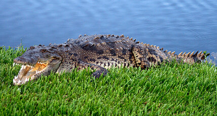 Rare crocodile found by Florida woman