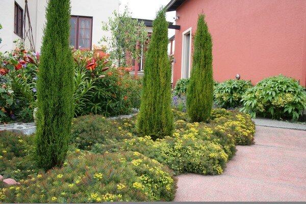 For a waterwise landscape consider Mediterranean garden