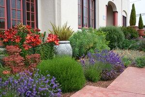 Traditional Mediterranean Plants Such As Olives, Lavender And Other Herbs,  And Italian Cypress Mix With Other Boldly Colored Garden Plants To Create  The ...