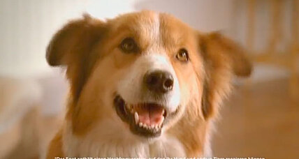 Nestlé launches TV ad aimed at dogs. Will it work?