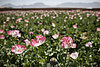 Afghanistan still world's top opium supplier, despite 10 years of US-led war