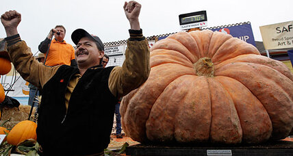 Happy Halloween! Do giant pumpkins have a size limit?