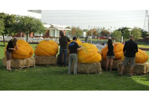 happy halloween: the story behind google's 1,000-pound pumpkins