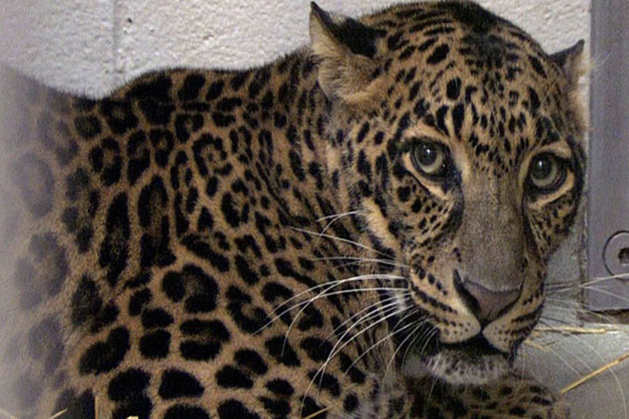 Exotic animals ban: Will ban be revived after Zaneville
