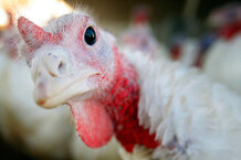 csmarchives/2011/11/1123-thanksgiving-quiz.jpg