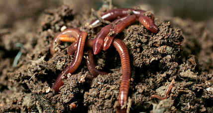 Worms in space: how one experiment could send them to Mars