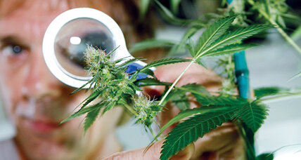 Confusion reigns over medical marijuana as states and Feds clash