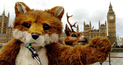 English flout hunting ban in foxy style