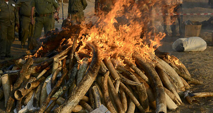 Why 5,000 pounds of ivory just went up in flames (+video)